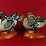 Pintails -  World Pairs
