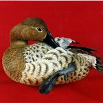 Canvasback Hen - Decorative Floating Lifesize